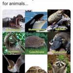 New animal code names 🤭