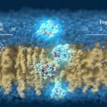 Supercomputer Predicts Cell-Membrane Permeability of Cyclic Peptides