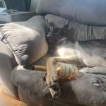 Party hard. Good boy harder 🐕