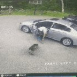 A fast collision because of a dog