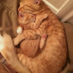 So adorable nothing beats the mother love