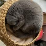 Startled little meow