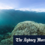 Great Barrier Reef doomed as up to 99% of coral at risk, report finds