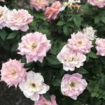 Lovely flowers in bloom