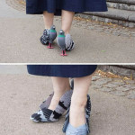 Oh dear! Pigeon shoes