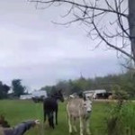 Donkey laughing at a dog getting shock from an electric fence
