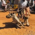 A man with Hyena in public Square in a Nigerian city
