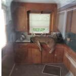 A cougar asleep in a kitchen sink