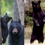 A cat or a bear ⁉️