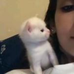 Tiny kitten kisses back