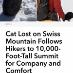 Two hikers save lost cat while hiking on Swiss Mountain. Brought back to his owners after missing for 4 days 🐈 💛