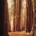 Getting Lost In Yosemite, CA