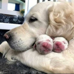 Beautiful babies like mom
