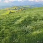 Grass getting blown by the wind