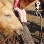 Horse tutorial # 42: The quickest way to attain nirvana