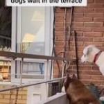 Nice neighbour