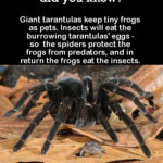 Who Knew? Spiders n Frogs in cahoots