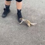 Helping a squirrel drink a bottled water to quench the thirst