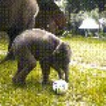 Baby elephant playing with water and a ball
