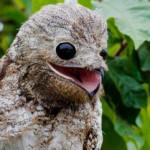 I really like this bird