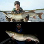 This perfectly cut in half hybrid Muskie that was caught twice in the span of 6 years
