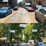 No trees vs trees