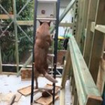 Dog climbs ladder on job site to find owner
