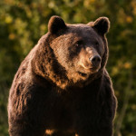 Austrian Prince illegally kills the biggest bear, Arthur, from Europe and Romania