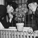 Police officers keeping a close watch on a seized illegal plant. Circa 1950's