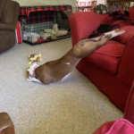 The sleepyhead dog