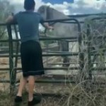 Trying to pet a horse ain't a good idea