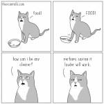 cat rationale