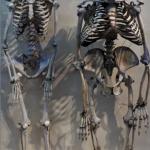 Human skeleton compared to a gorilla skeleton
