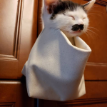 Kitten with a mustache, in a bag