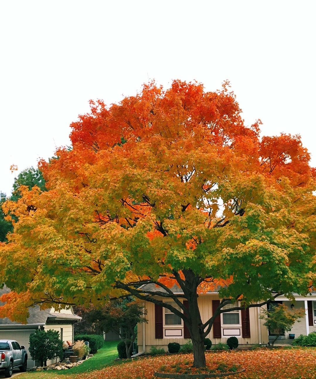 The tree has the perfect autumn gradient
