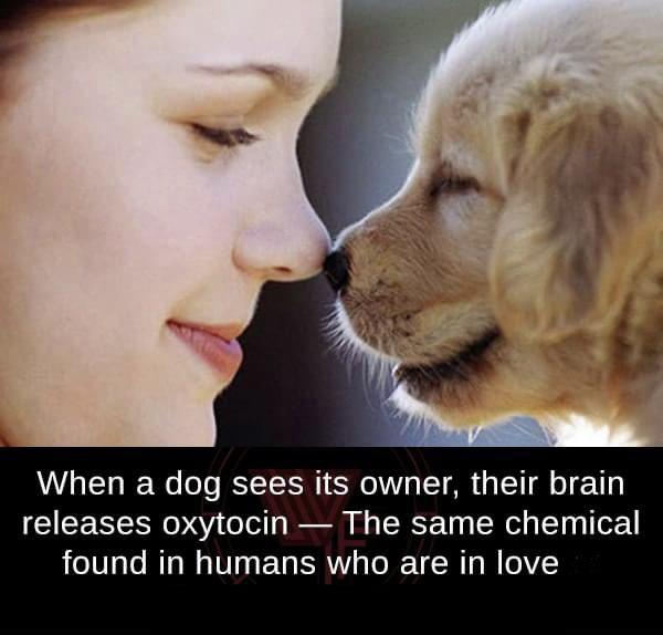 When a dog sees it's owner 🐩