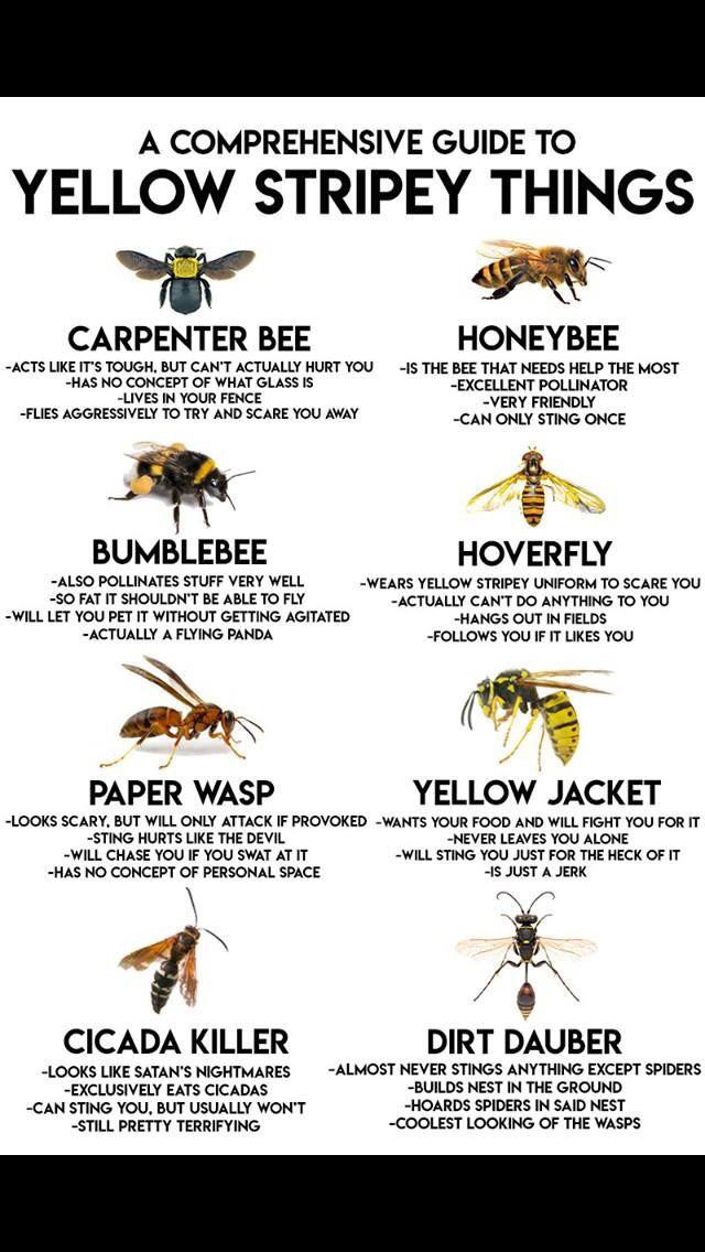 A comprehensive guide to yellow stripey things