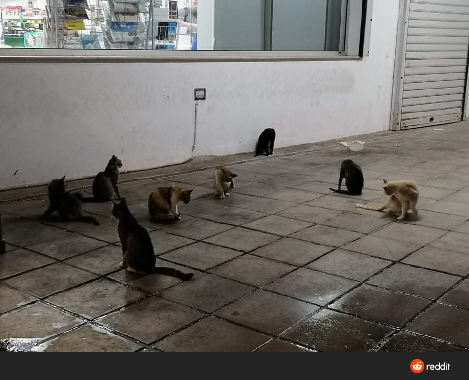 The least cat influated street in Cyprus 🐈 😍