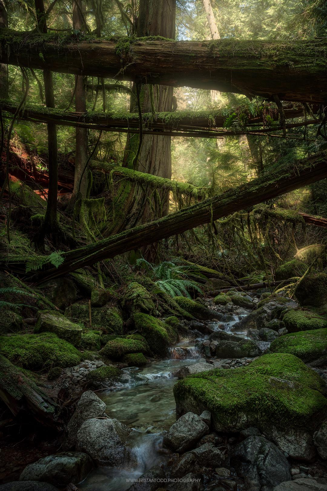 A quiet little creek in the North Shore Mountains near Vancouver, Canada