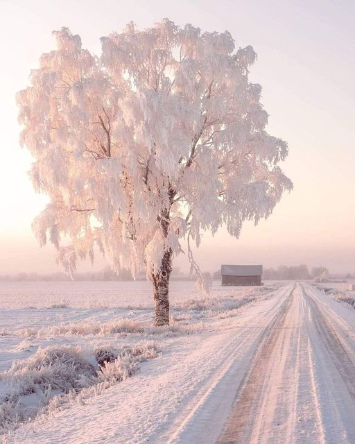 Snow in Finland