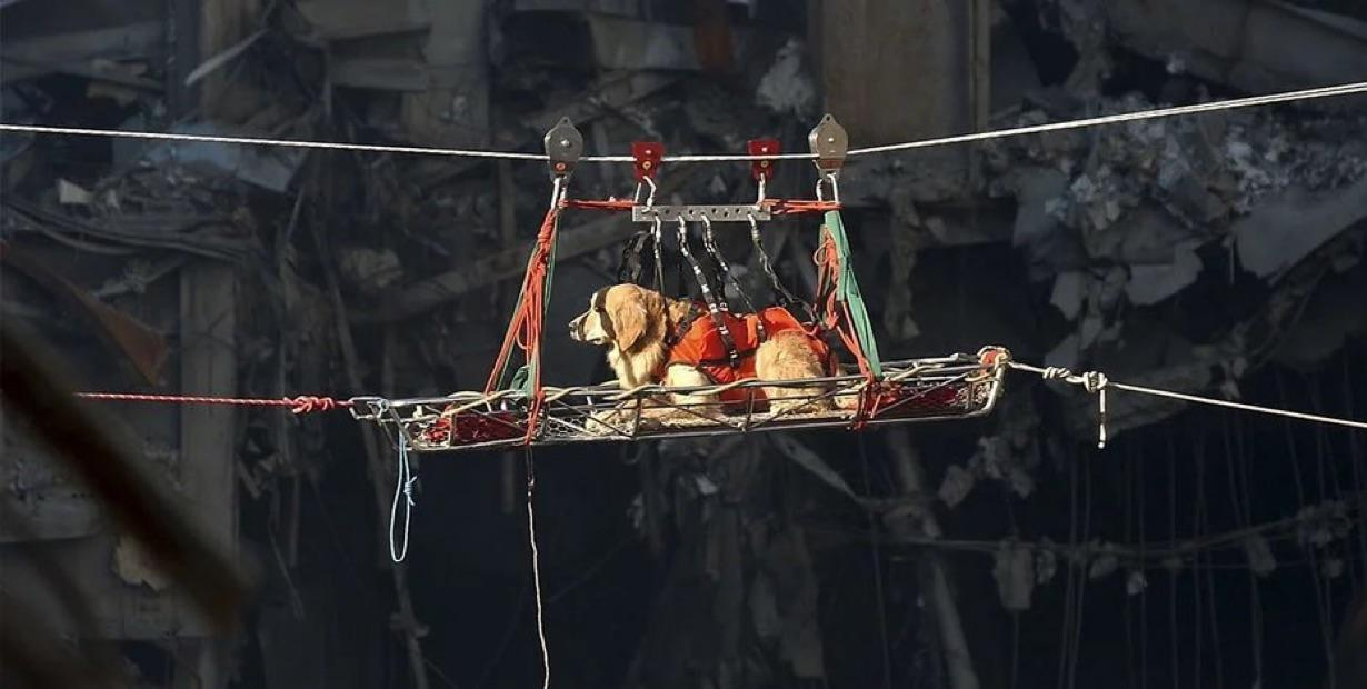 This is Riley one of the many SAR dogs looking in the debri for survivors from 9/11
