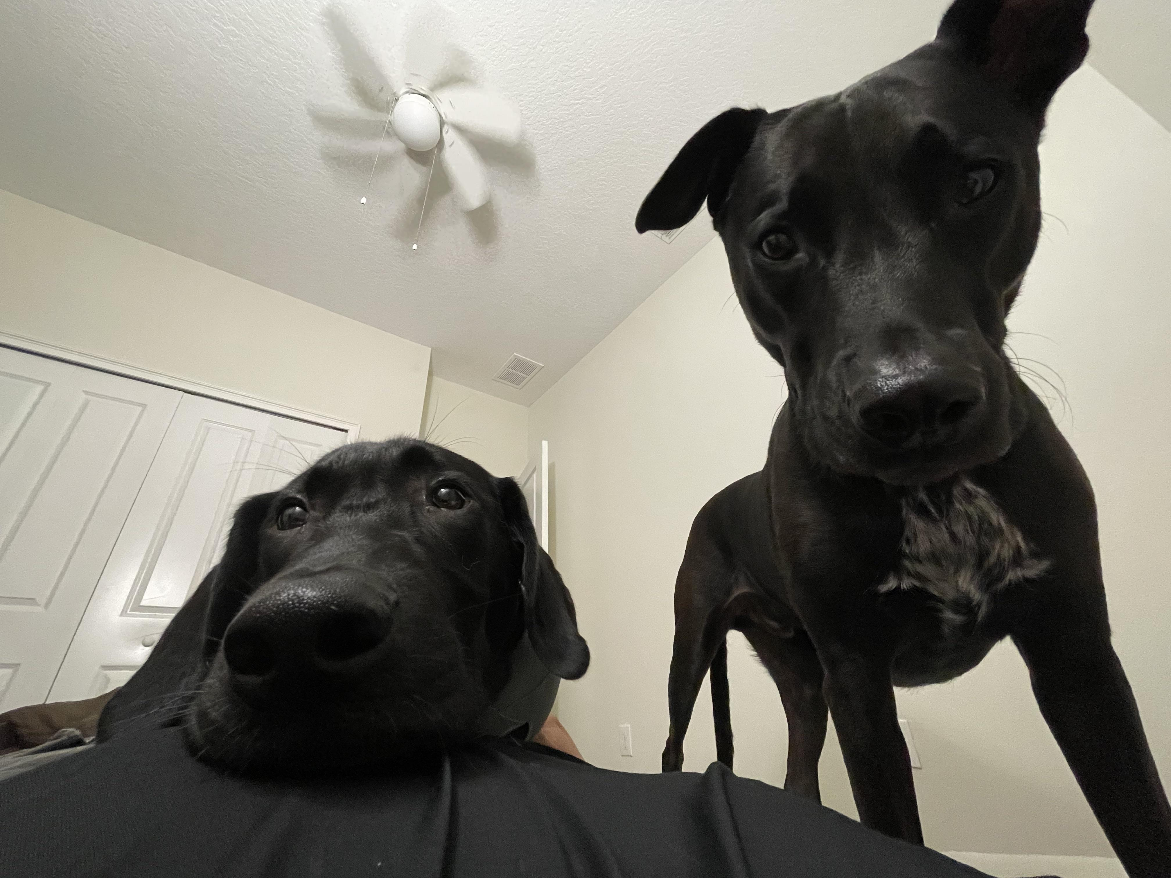 This is what I wake up to every morning. They don't even make a sound, they wake me up with sheer will