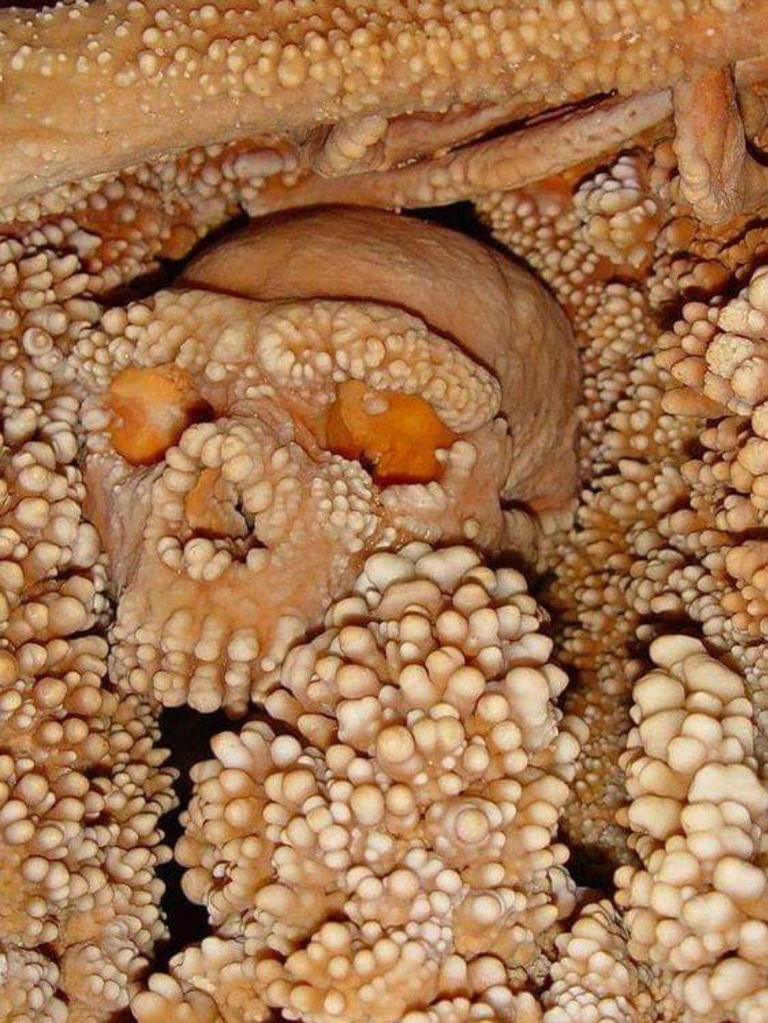 Human skull being absorbed by limestone