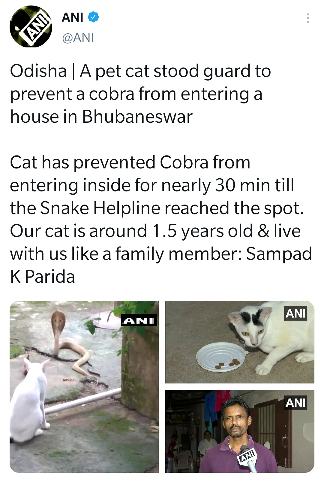 Cat guards family from cobra