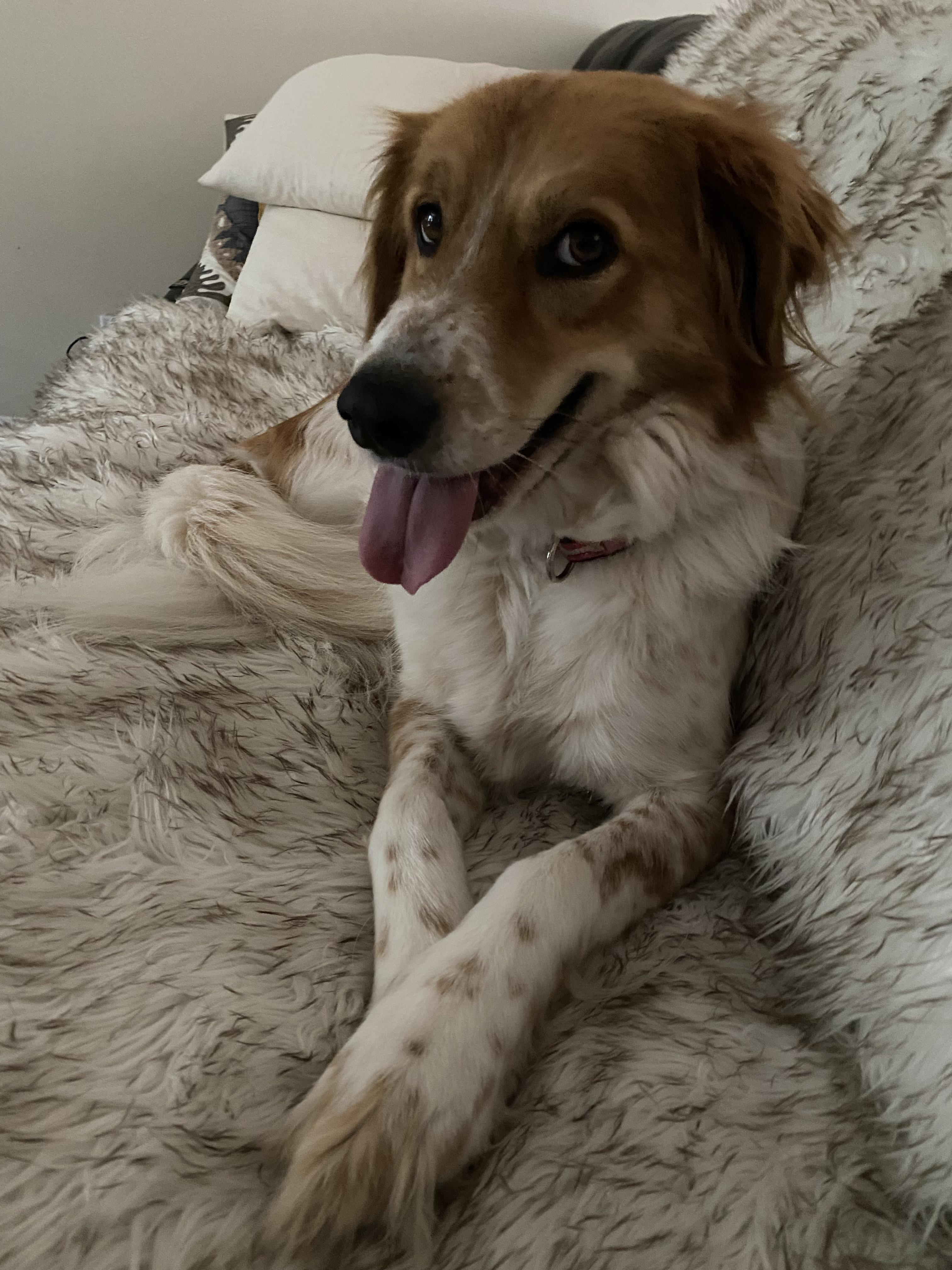 Hi! I'm punkin. Mom wants to know what breed I am