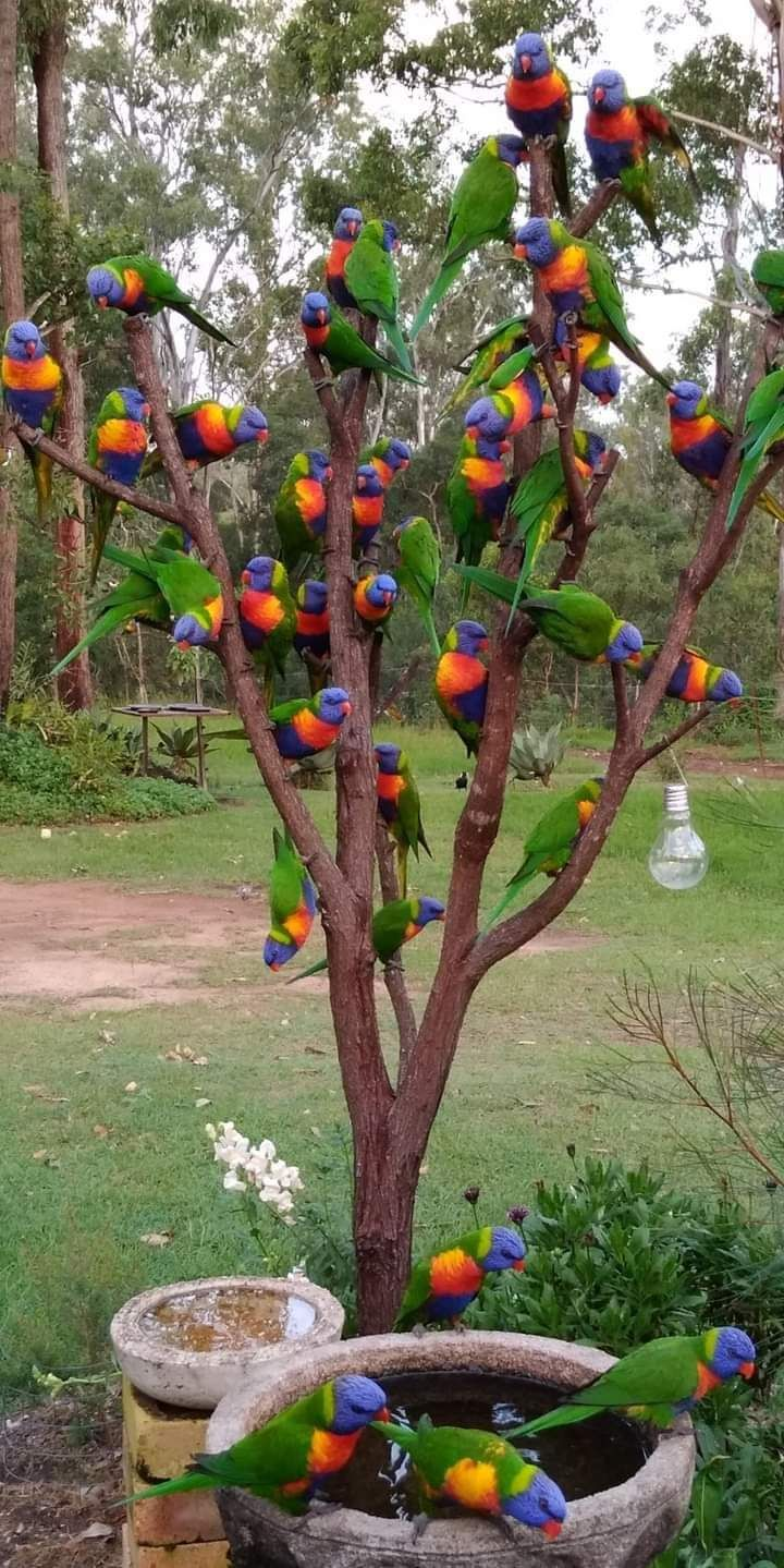 Party time of Parrots