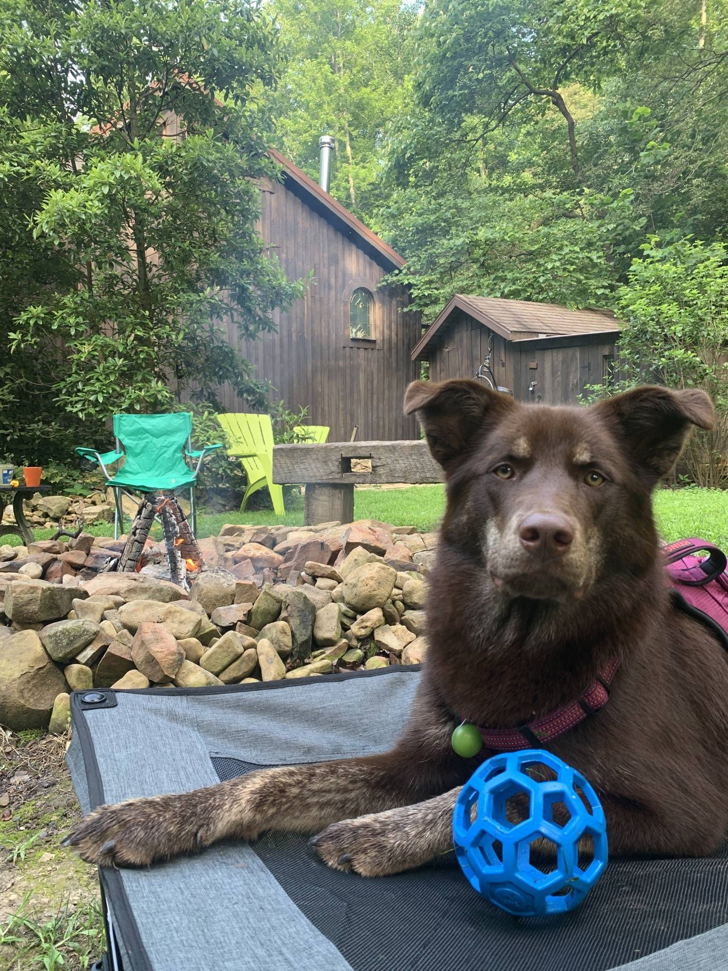 Took the pup to a cabin in the Shawnee State Forest, Jupiter is loving it! 🤩