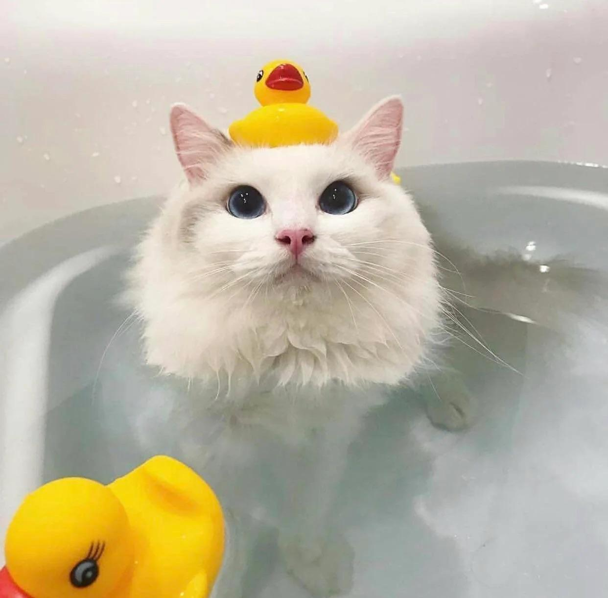 Apparently not all cats hate bath time! xd