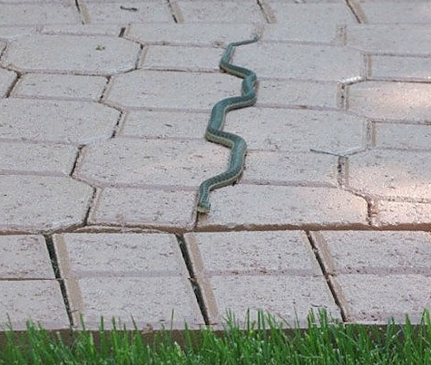 The snake takes the path of least resistance