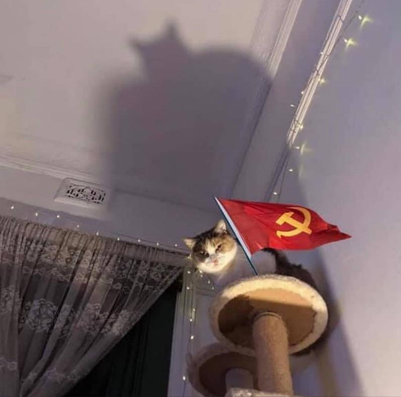 Chairman Meow, Guardian of the gulag